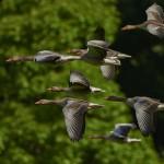 渡り鳥を追う