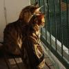 猫だらけの横丁
