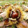 「里の秋」の話