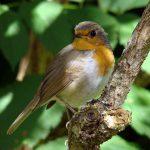 愛する小鳥よ